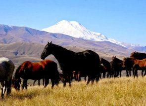 Кабардинская або черкеська порода - коні кавказьких гір