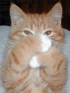 Як дати кішці таблетку