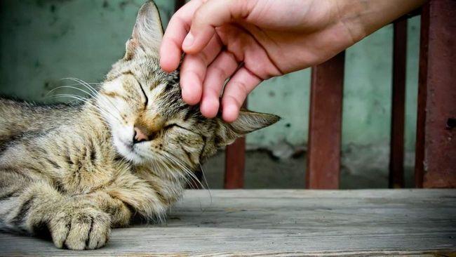 Кішки дійсно вміють лікувати.