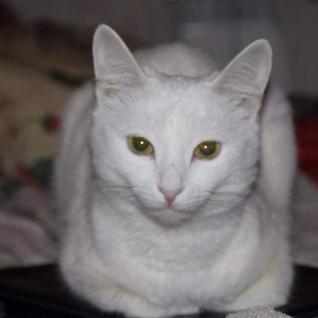 Фелінотерапія - лікування і профілактика різних захворювань за допомогою кішок.
