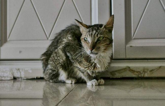 Лікування кішками багато в чому грунтується на енергетичному обміні між твариною і його господарем.