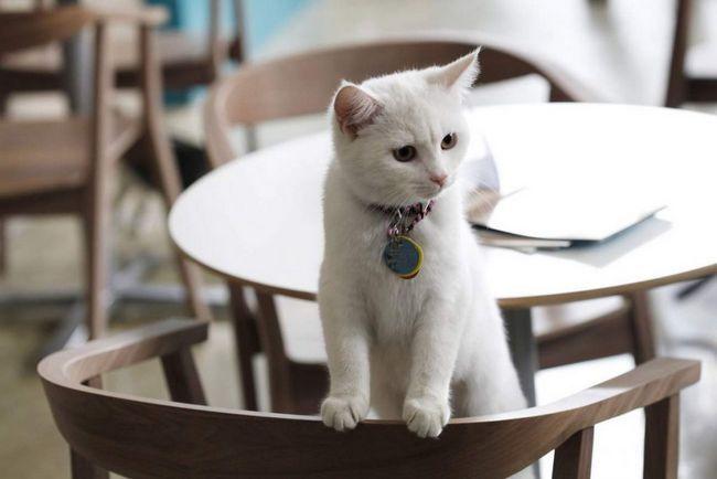 У психіатрії кішки іноді виявляються кориснішими, ніж доктора з великим досвідом роботи.