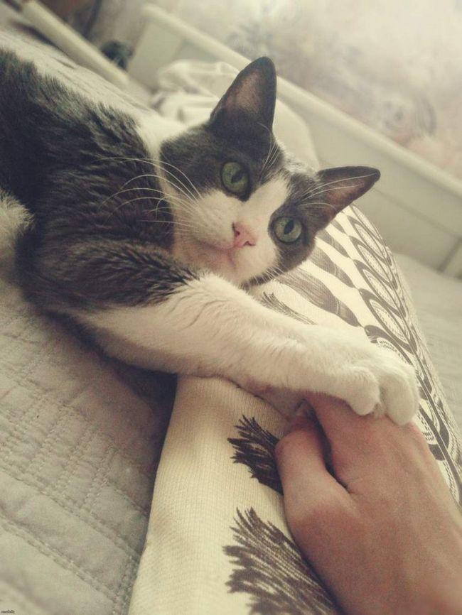Саме лікування кішка проводить не частіше ніж один раз на 2 дні.