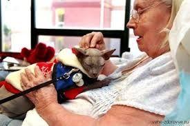 Спілкування з кішкою лікує людей