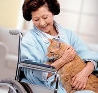 Якщо ви хочете менше хворіти - заведіть в своєму будинку кішку!