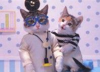 як кішки лікують людей