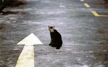 Як кішки знаходять дорогу додому?