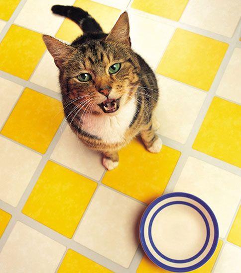 Як кішки нами керують