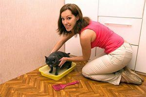 Місце для туалету кішки