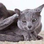 Як лікувати алергію у кішок