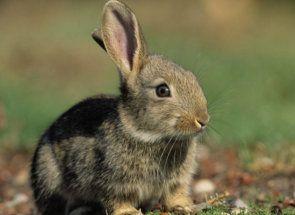 Як лікувати кроликів від діареї?