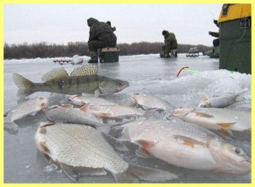 Як знайти взимку рибне місце фото