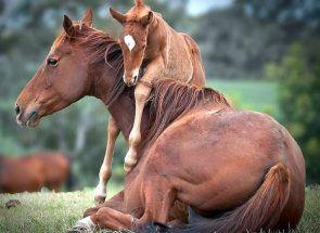 Як назвати коня: підбираємо відповідну кличку