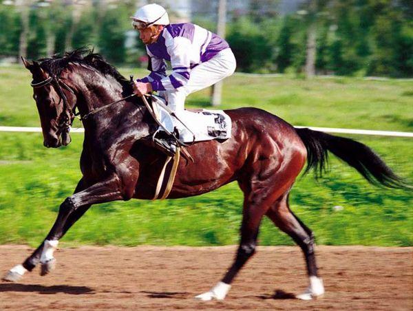 Спортивна кінь з вершником на скачках