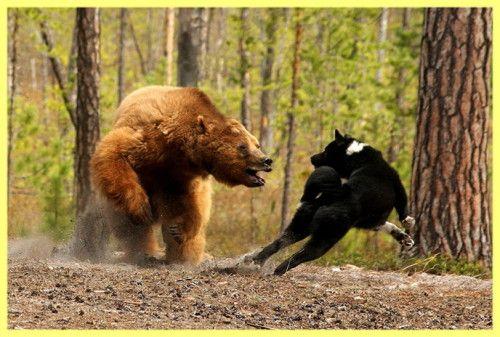 Як полювати на ведмедя