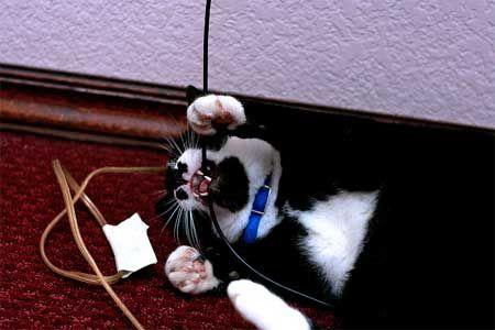 Як відучити кішку гризти дроти.