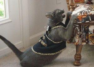 Як відучити кішку точити кігті про меблі