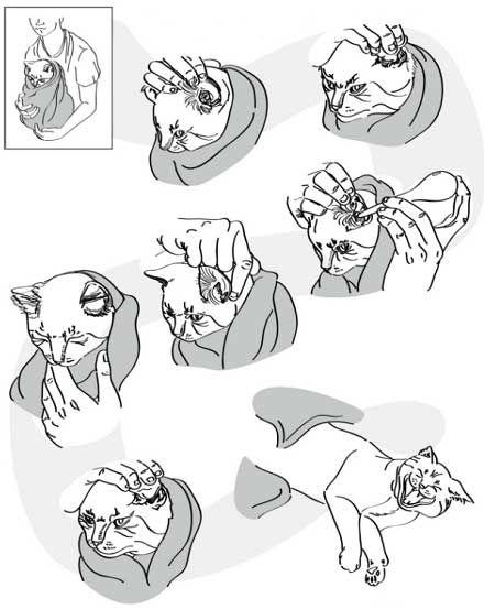 Як почистити кішці вуха.