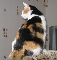 Як підготувати кішку до переїзду в новий будинок?
