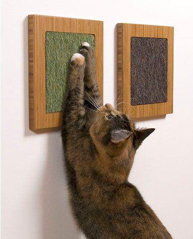 Як підстригти кішці кігті?
