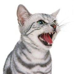 Як зрозуміти кішку