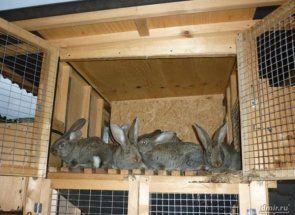 Як побудувати клітку для кроликів в 2 яруси?