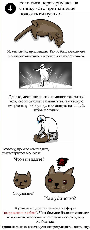 Як правильно гладити кішку