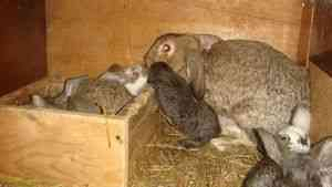Годувати два кроликів. кролик банні, кейдж, domestic animal, подача, харчування, рук ...