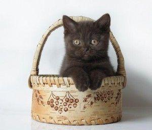 Як правильно вибрати кошеня