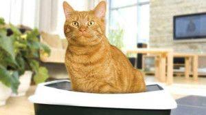 Кіт сидить на лотку