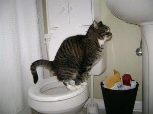 Кіт ходить на унітаз