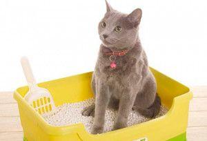 Кот в лотку