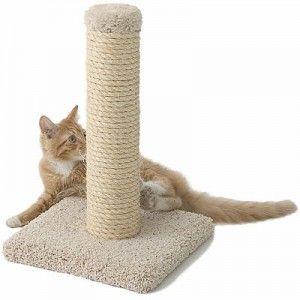 Як привчити кішку до когтеточке