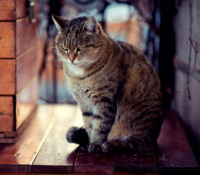 Кішки, як і діти, не люблять і не особливо розуміють слово «не можна».