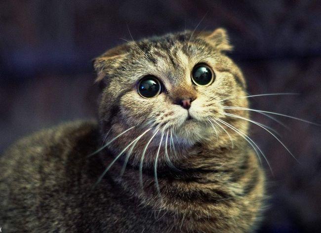 Кішки не люблять різких звуків.