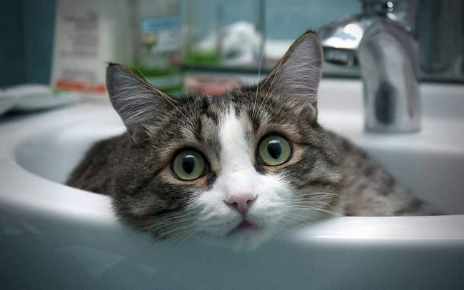 Кішка - дуже розумна істота.
