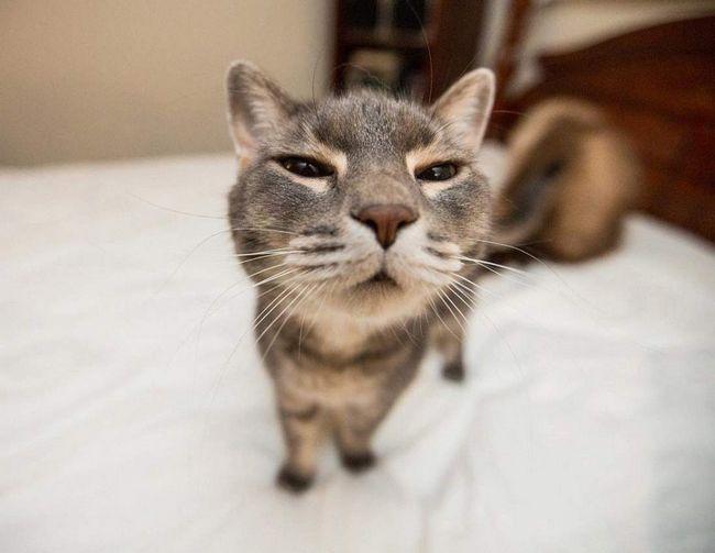 Часом складається навіть враження, що кішка розуміє людську мову.