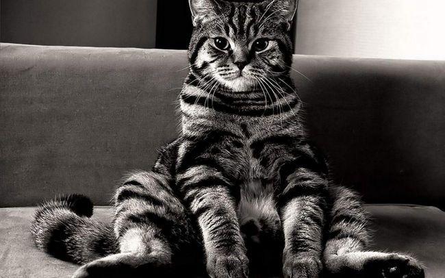 Кішки зчитують інтонацію і настрій господині.