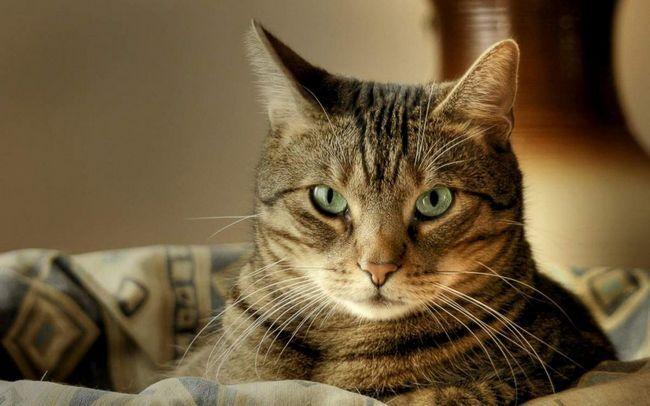 Якщо натякають кота мордочкою в «шкоду», він може сприйняти це як