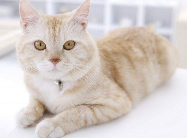 Територію у котів мітять не всі підряд, а тільки господар, головний кіт.