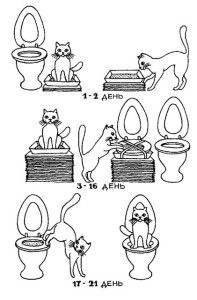 як привчити кішку до унітазу