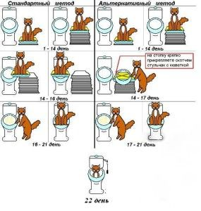 процес привчання кота до унітазу