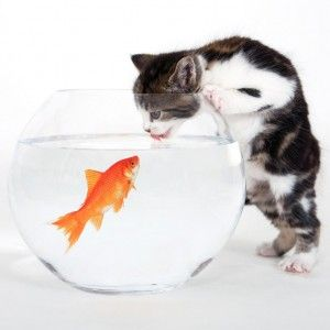 Як привчити кішку пити воду