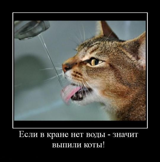 Вода для кішки
