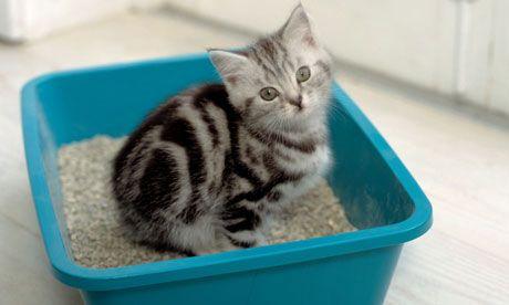Привчаємо кошеня до лотка