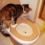Як привчити кошеня до унітазу