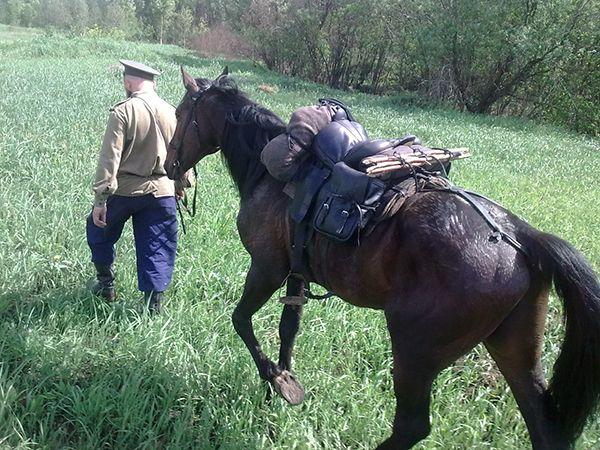 Як відбувається сідлання коней?