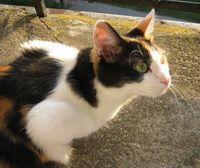 Як урізноманітнити життя домашньої кішки?
