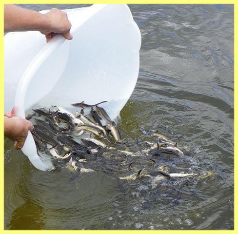 Правила зариблення водойми