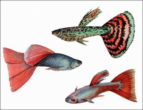 Як риби народжуються і коли вмирають